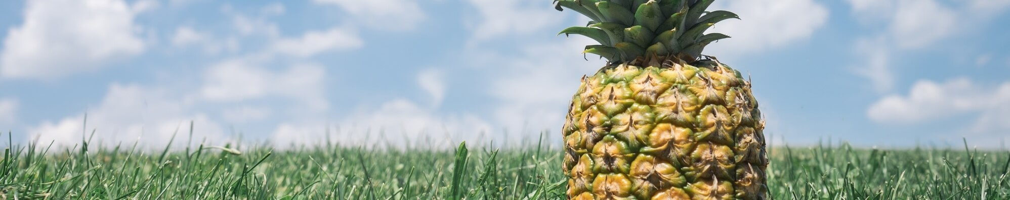 Pineapple Good Luck picture
